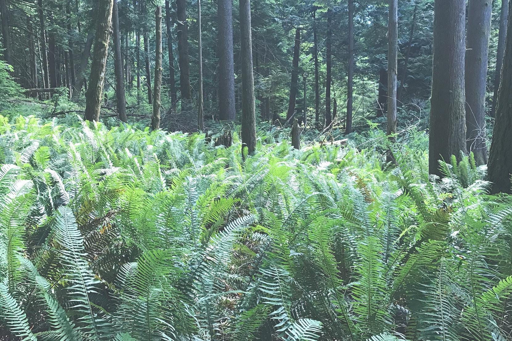 BC-Cannabis-Micro-Climate